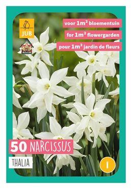 Narcissus triandrus 'Thalia' (50)
