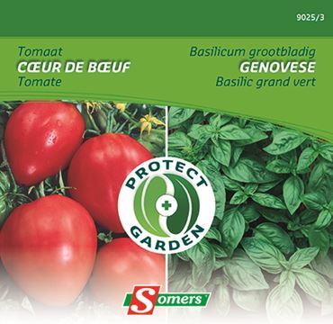 Pg  Tomate Coeur Boeuf + Basilic