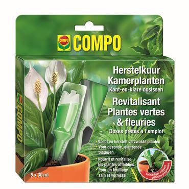 Compo Revitalisant Plantes Vertes Et Fleuries