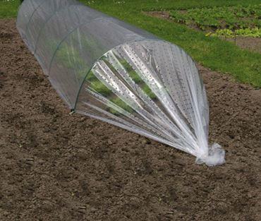 Film primeur perforé - LDPE transparent, 50 µ, 400 trous/m² - 2 x 10 m