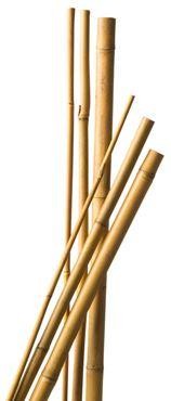 Tuteur bambou naturel - H150 cm x Ø12-14 mm - 4 x