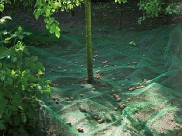 Filet de ramassage fruit et feuilles mortes – PP, maille 8X8 mm, 35 gr/m² - 4,2 x 4,2 m