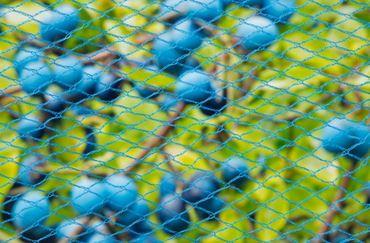 Filet anti-oiseaux NANOfilament - HDPE, bleu, maille +/- 8x8 mm, 22 gr/m² - 10 x 4 m